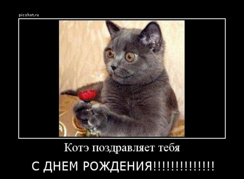 post-102-0-52943500-1359994020_thumb.jpg